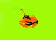 orangecamoflauewomantankini.jpg