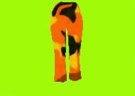 orangecapripants.jpg
